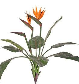 Strelitzia, Paradiesvogelblume, 2 Blüten u. eine Knospe, 8 Blätter, 70 cm