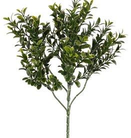 Rama de boj, (Buxus sempervirens) con 48 tips, (672 hojas), 47cm
