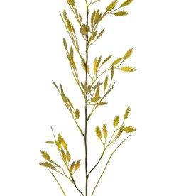 Plattährengras (Chasmanthium latifolium) mit 13 Büscheln (91 Aehren) & 2 Blättern, 98 cm