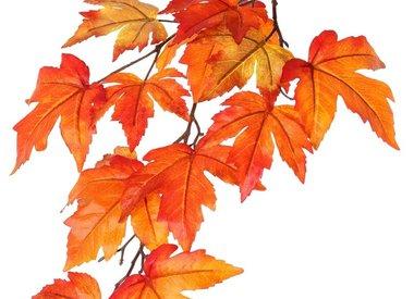 Rama de hojas / bayas