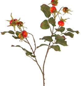 Kartoffelrose, Apfel-Rose (Rosa rugosa), 2x verzweigt, 9 Hagebutten, 5 Blattsets (18 Stk.), 60 cm