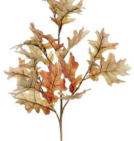 Eikentak (Quercus) 'Modern Art', 4x vertakt & 18 blad (10 L /8 Med.), groene steel, 75 cm