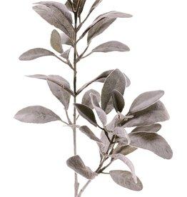 Eselsohr, (Limonium vulgare) , 2 Verzweigungen, 38 beharrte Blätter, 71 cm