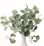 """Dichondra """"Silver Falls"""" Busch, mit 11 Verzweigungen und 84 Blättern, 25cm"""