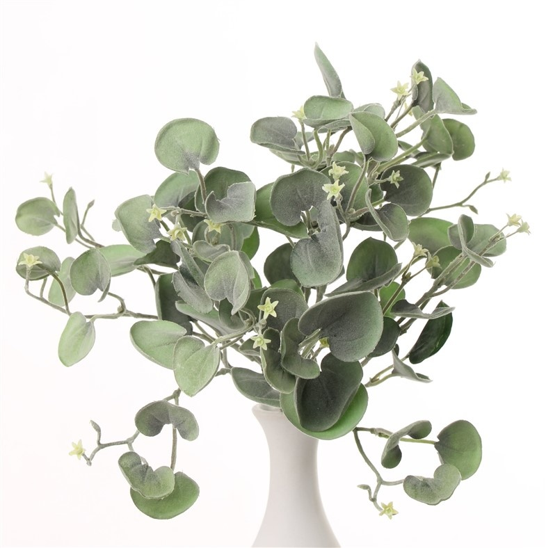 "Dichondra ""Silver Falls"" bush 11 vertakkingen, 84 bladeren, 25cm"