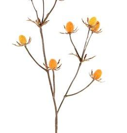 Cardo (Eryngium), 9 cardos (ca.1,5 cm), 43 cm