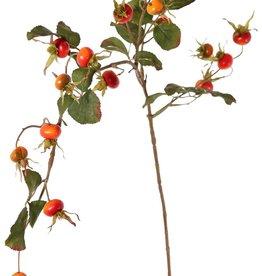 Rosa rugosa, rosa japones, 18 escaramujos, 20 hojas, 105 cm