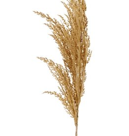 Pampas grass 'New Style', 1 'flocked' feather (42 cm), 100 cm