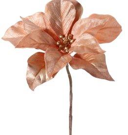 Poinsettia (Christmas flower) 'Glamour', 1 flower