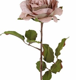 Top Art Rosa 'Glamour', 1 flor