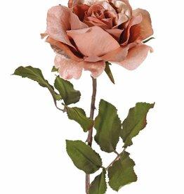Rose 'Glamour', 1 flower