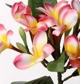 Frangipani (Plumeria) x 12 Flrs, 5 Buds & 5 Lvs, 73cm