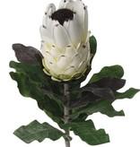 Protea  14 hojas, 75cm