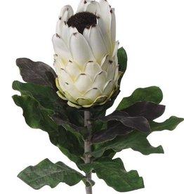 Protea x 14 Lvs W/Flk Stem, 75cm