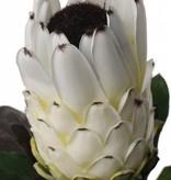 Protea 75cm, Blume 12cm, Ø 8cm, 14 Blaetter, beflockter Stiel