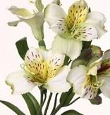 "Alstroemeria ""bella"", 5 flores, 3 capullos, 16 hojas 75cm"