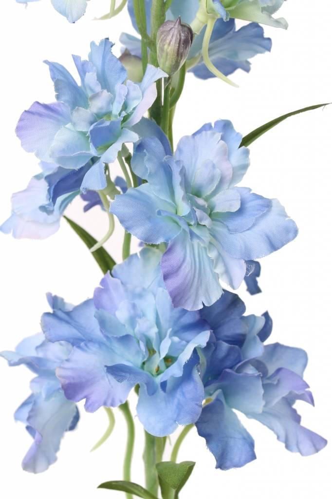 Delphinium Rittersporn, 12 Blumen