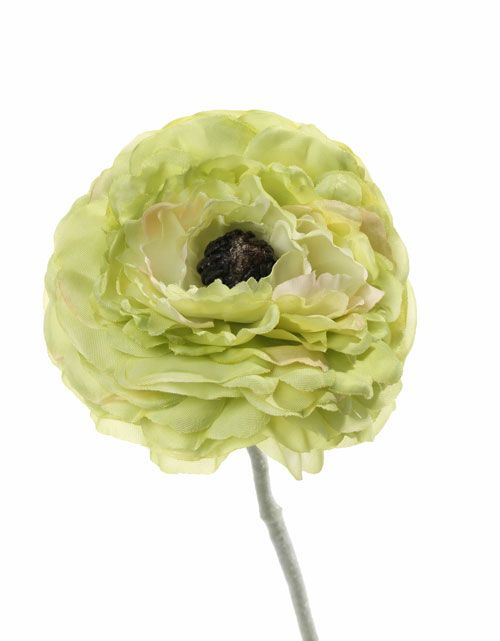 "Ranunculus ""little joy"", x1 flr, Ø 8cm, flocked stem, no lvs 36cm"