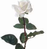 Rose Caroline 70cm