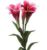 Flor de Lis 'Longiflorium, 2flores, 1 capullo. 7 hojas, total 76cm