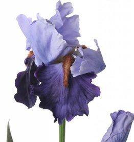 Iris, 71cm