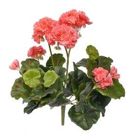 Geranienpflanze ca. 30 cm