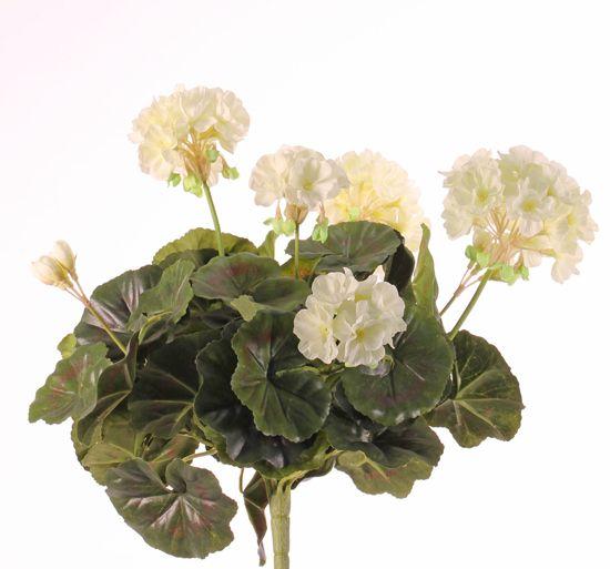Geranium francesa, 30cm