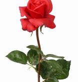 Rose ´Caroline´, 70cm, real touch, Ø7,5cm