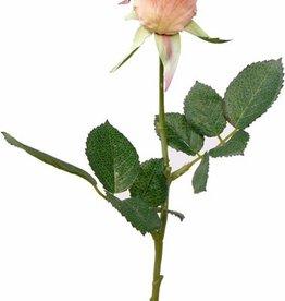 Rose Gina, 2lvs, short stem, 35cm - special offer