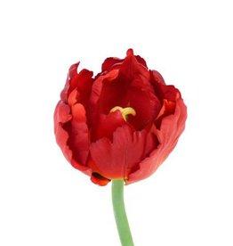 Tulip Parrot luxe, short stem 25cm