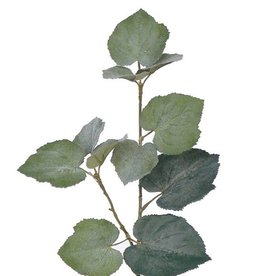 Tilia (Grape) Lvs short stem, 50cm