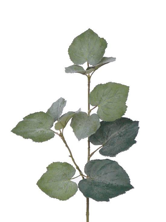 Tilia (Grape) Lvs short stem, 50cm