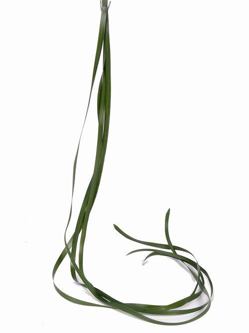 Bandgras, 1cm breit,  6 Stck.  je Beutel,  122cm