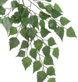 Rama abedul (Betula), 48 hojas, 64cm