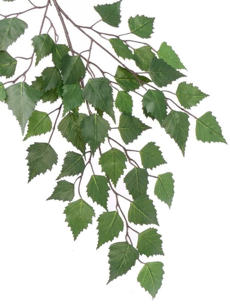 Berkentak met 3 vertakkingen,  48 bladeren,  64cm