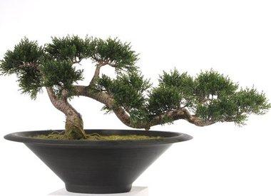 Bonsai - Kunstbonsai