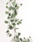 Dichondra hanging plant 'silver falls' 72lvs 116cm