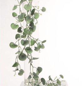 "Dichondra ""Silver Falls""  72 hojas, 116cm"