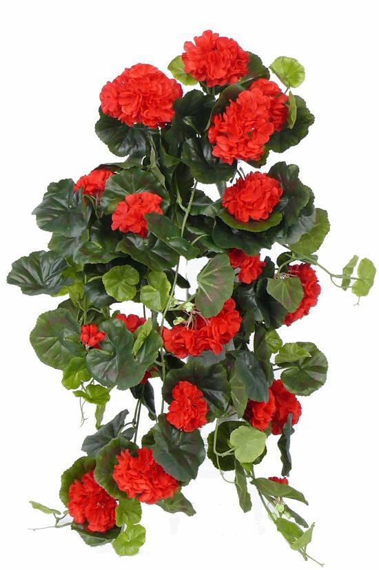 Hängegeranie (franz.), Pelargonium peltatum mit 10 Verzweigungen, 232 Blüten, 128 Blätter, 70cm