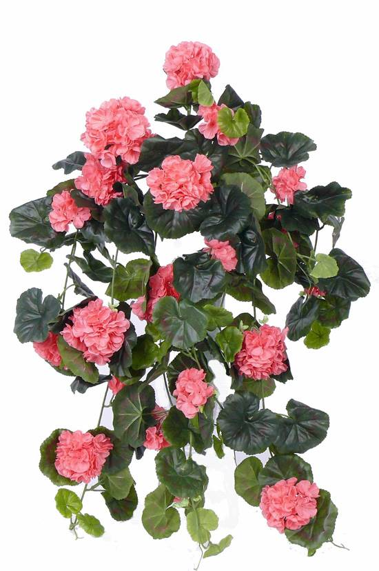 Geraniumhanger (Franse), Pelargonium peltatum, 10 vertakkingen, 232 bloemen, 128 bladeren, 70cm