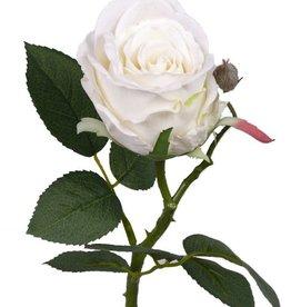 Rosa Jessica, 7 hojas, 32 cm, Ø 6cm