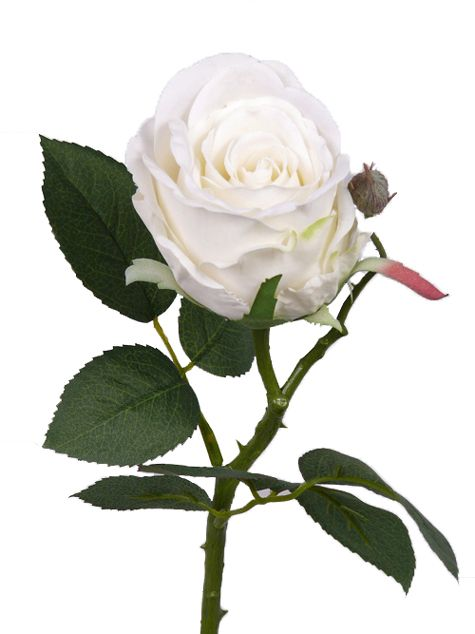Rose Jessica,  32cm, 7 Blätter, Ø 6cm