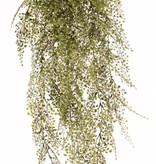 Venushaar (Adianthum) maxi plastic x15 x195lvs 85cm