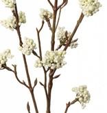 Callicarpa, 17 clusters, 81cm