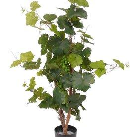 Druivenplant 79 bladeren + 2 trossen 90cm