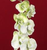 Phalaenopsis Winterorchidee mit 6 Blueten 3 Knospen Schnee 76cm