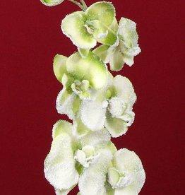 Phalaenopsis x6 flores, 3 capullo, nieve, 76cm