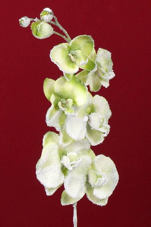 Phalaenopsis x 6 Flrs, 3 Bud (Snow) 76cm