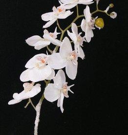 Phalaenopsis w/snow stem 81cm