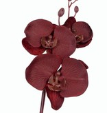 Phalaenopsis 3flores, 4 capullo, plc tallo 61cm